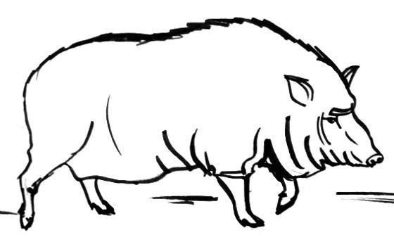 Wild Boar Hog Coloring Sheet Wild Hog Outline Raskraska Kaban