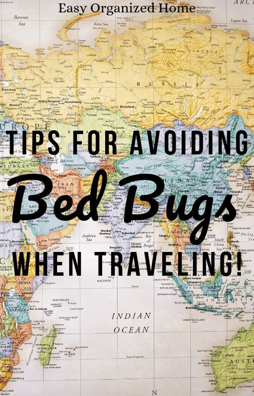 4326d894d904642cc979f8169cd11613 - How To Get Rid Of Bed Bugs While Backpacking