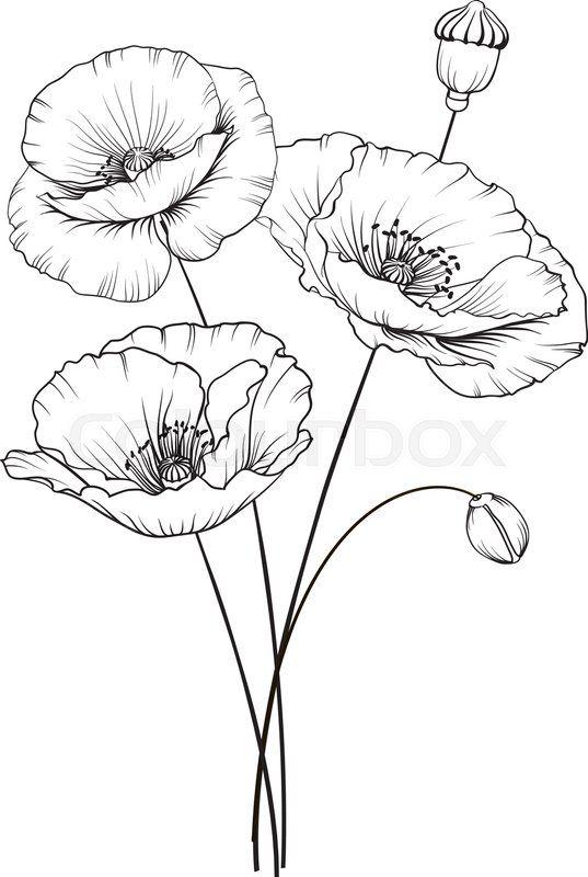 Stock Vektor Von Mohnblume Kunst Grun Illustration Blumenzeichnungen Blumen Zeichnung