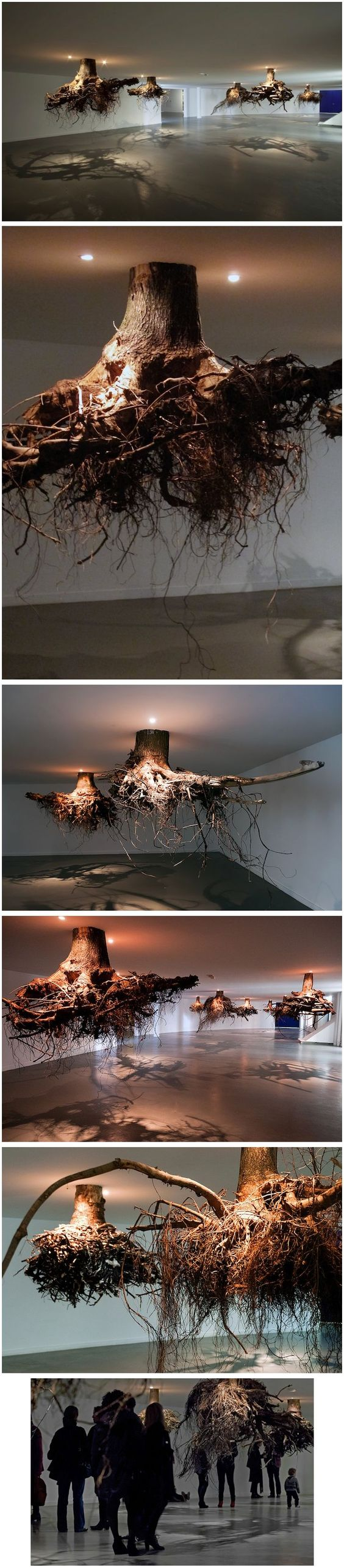 tree roots emerge from the ceiling in an installation by giuseppe licari                                                                                                                …