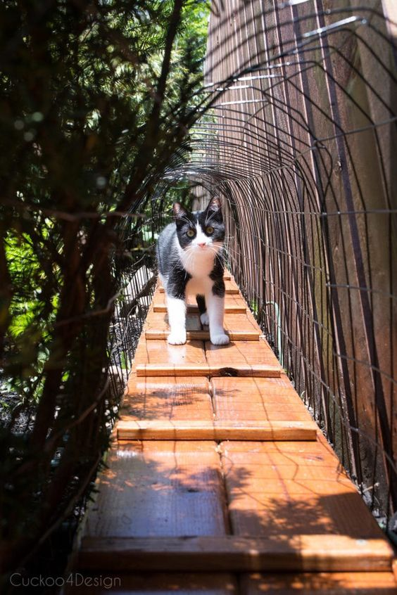 cat exploring outdoor cat tunnel that leads to enclosure