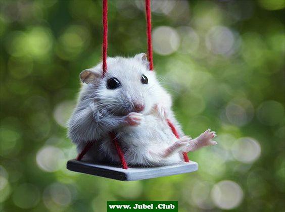 Maus auf der Schaukel
