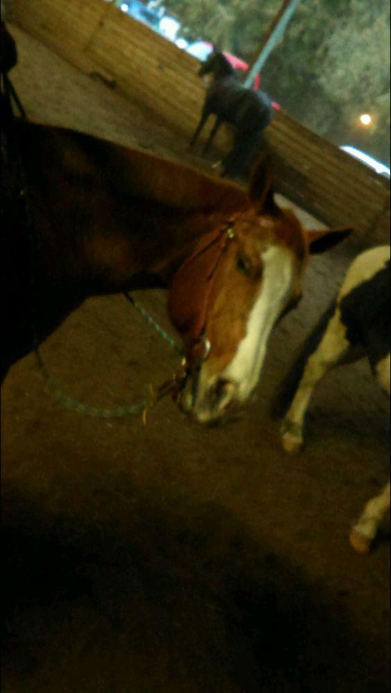My horse looks crazy