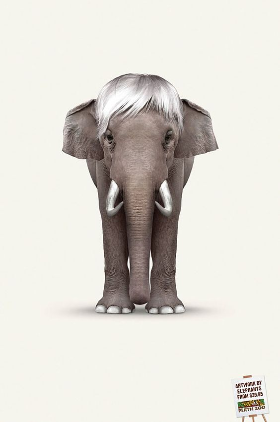 propaganda elefante