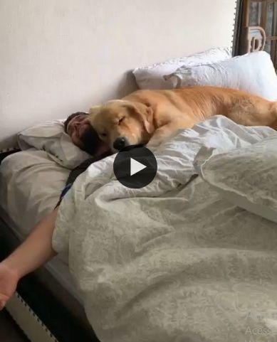 o cachorrinho dormindo em cima do seu dono