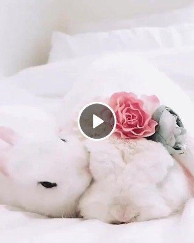 esse coelhinho é  muito carinhoso