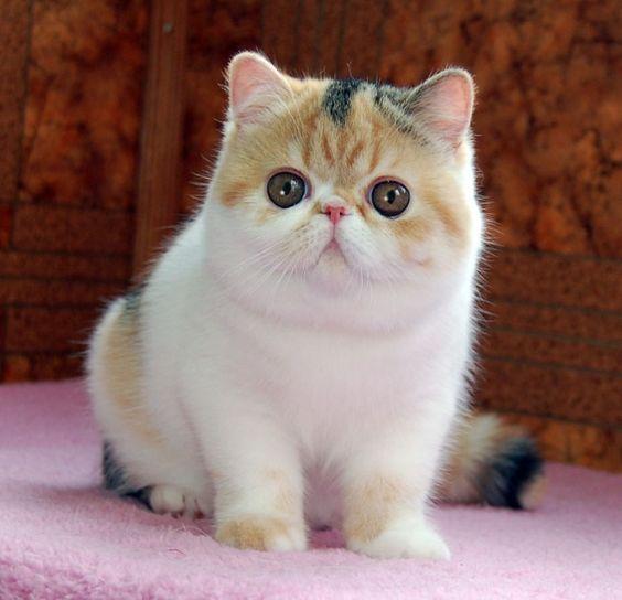 kitten died