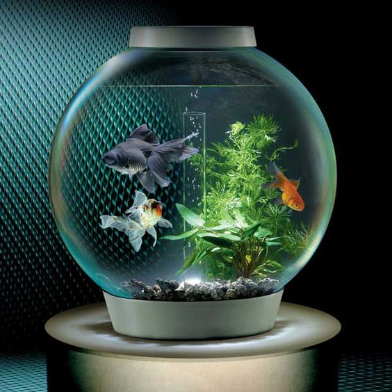Old fashion round bowl turned mordern fish tanks for Small fish tanks