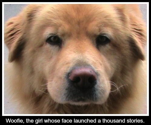 Woofie, a golden retriever chow chow mix, is Katherine Kotaw's muse and one of two dogs that inspired the KOTAW name and philosophy.