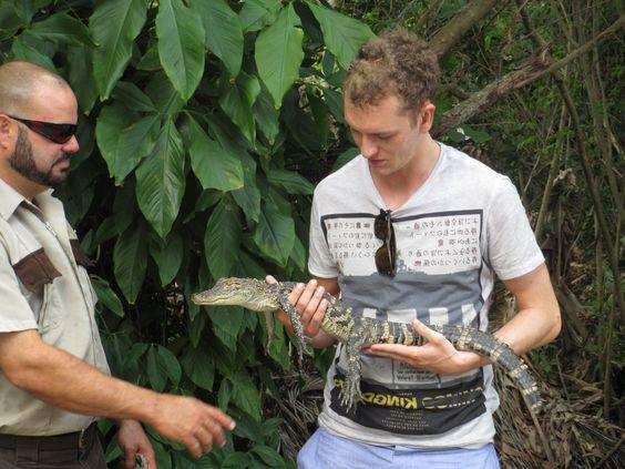 Everglades Safari Park: se tiver coragem, você pode até segurar um filhote de jacaré! http://www.weplann.com.br/miami/tour-everglades