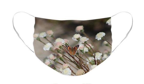 Painted Lady on Wild Pincushion Flower in Coachella Valley Wildlife Preserve Face Mask by Colleen Cornelius. The face mask is machine washable. All face masks are available for worldwide shipping and include a money-back guarantee.