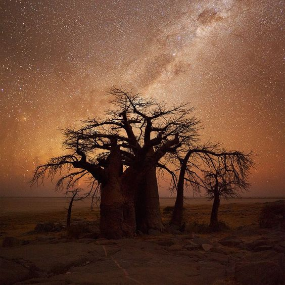 Star panoramas & old wise trees