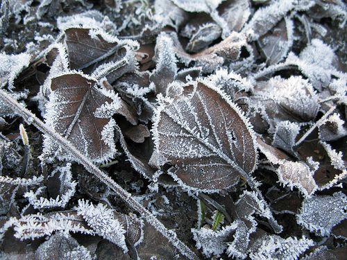 frosted... by Emma Lamb