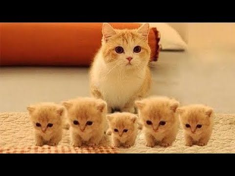 قطط كيوت مضحكة مش هتقدر تغمض عنيك Cute Cats Are Funny You Not Be Able Baby Cats Kittens Cutest Cute Baby Cats