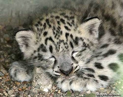 The Babies Of Any Species Are SO CUTE