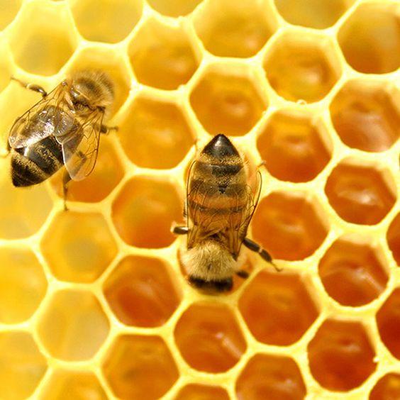 Cách trị nám bằng mật ong tốt nhất hiện nay