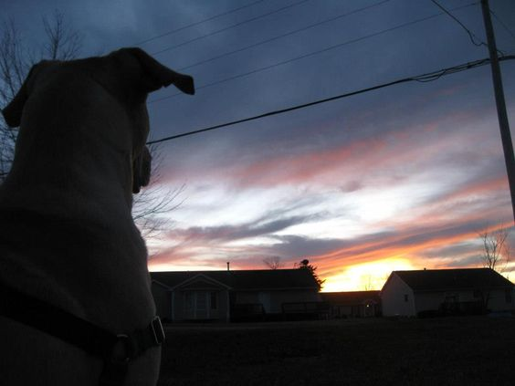 Watching the sunset with our yellow Lab, Buddy (2012)