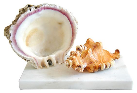 """Oyster and Snail Seashells on Marble 9""""L x 4""""W x 6""""H ($275.00)  $149.00 One Kings Lane"""