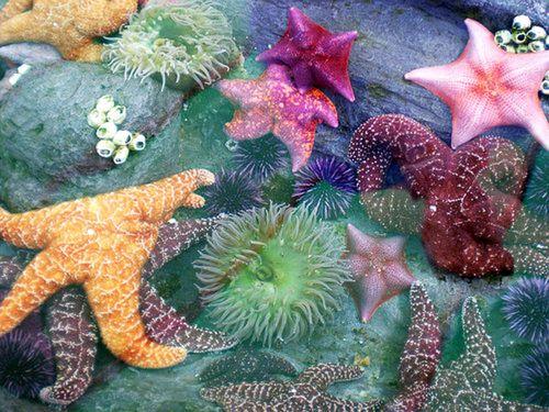 vibrant sea life