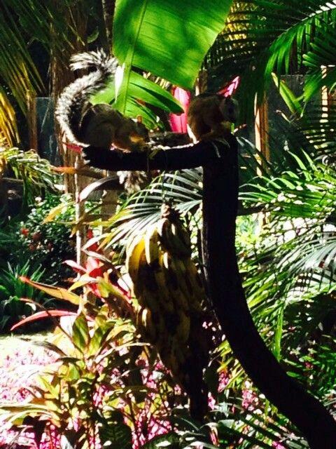 Állatparadicsom, Costa Rica