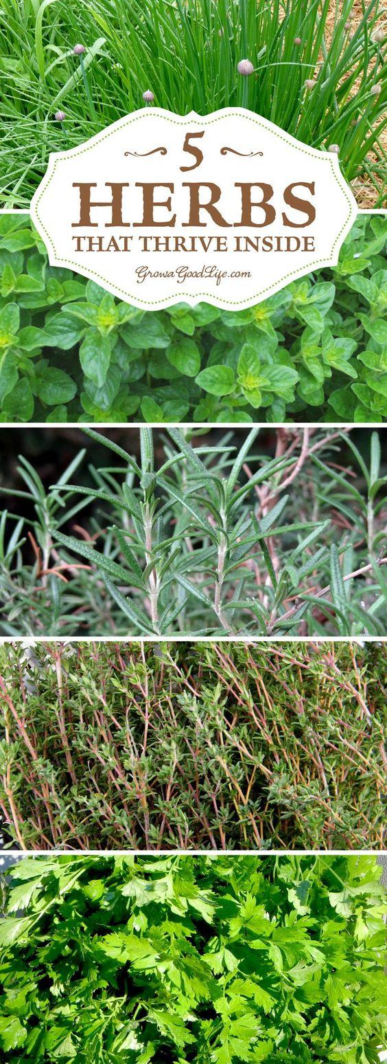 Gardens Herbs Garden And Indoor On Pinterest