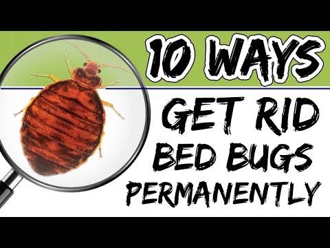 How To Get Rid Of Bed Bugs So They Don T Come Back Youtube Rid Of Bed Bugs Bed Bugs Kill Bed Bugs