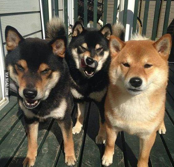 You wowed to the wrong neighborhood motherbarker. #doge #9gag