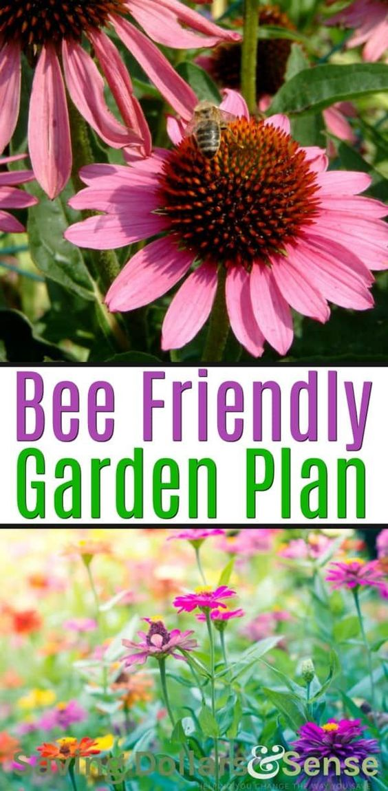 Bee Friendly Garden | Everything you need to know how to make a bee friendly garden that includes a bug hotel, food, water and flowers bees love and the best location for your backyard garden that will attract bees using wildflowers.