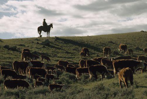 Cowboy - Wyoming: