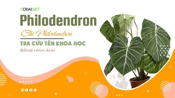 Tra cứu tên khoa học của các loài cây thuộc chi <strong>Philodendron</strong> bằng hình ảnh