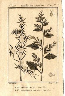 "buffon botanical french 1775 engraving 4 x 6""  $25 - 12"