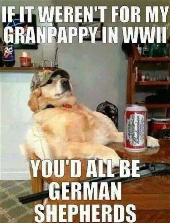40 Funny Quotes Of The Day And Short Funny Sayings Funny Dog