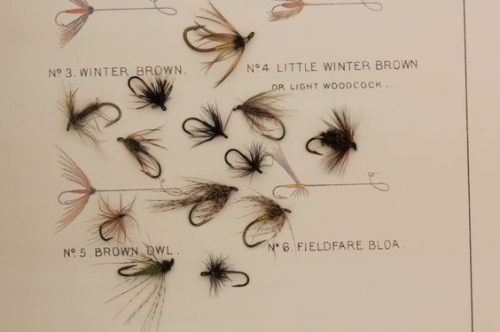 North Country Spiders