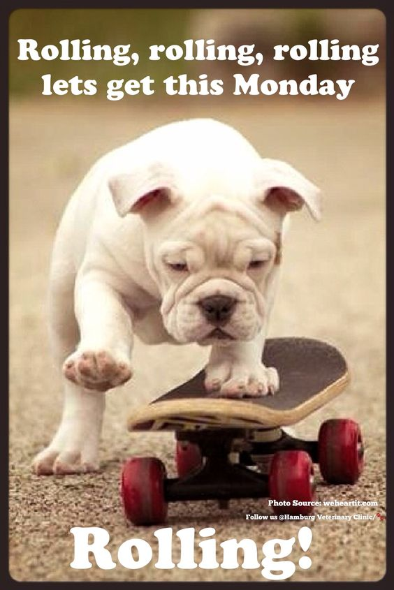 Monday humor | Animal funny | Cute dog | Monday already | New day | New week: Rolling, rolling, rolling lets get this Monday rolling! Wishing you a great day and even better week!