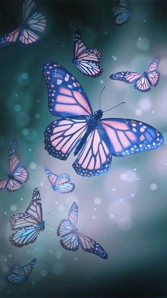 Pin Oleh Nur Salina Di 3d Kupu Kupu Gambar Latar Belakang Butterfly wallpaper hd 3d