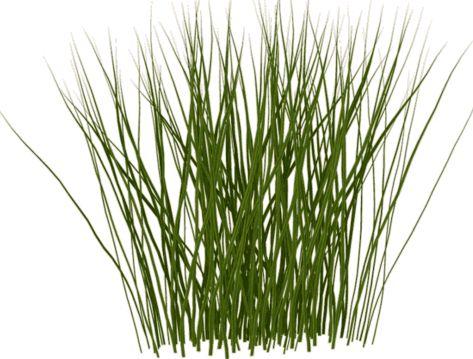 3d shrubs google search 3d library pinterest for Tall grass shrubs