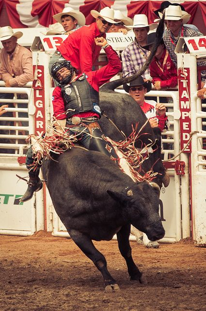 Bull Riding At Calgary Stampede