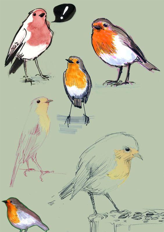 Robin bird, Bird illustration and Birds on Pinterest