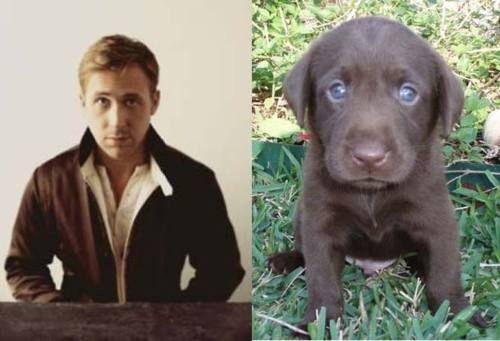 Ryan vs. puppy   (Fantastic website!)