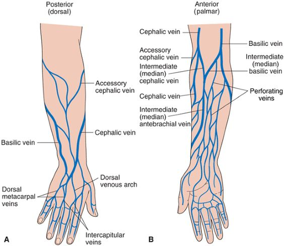cephalic vein venipuncture – gothing, Cephalic Vein