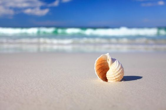 Beautiful tropical shell on the beach vacation