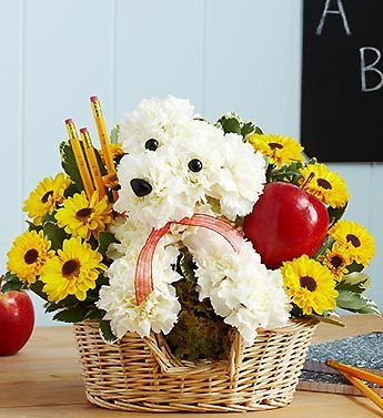 Teacher's Pet™ - a-DOG-able® arrangement of the freshest white carnations, yellow poms and variegated pittosporum includes pencils and an apple for the teacher $59.99 #teachers #adogable #teachergifts #thankyou: Teachers Pet, Floral Design, Flower Arrangements, Teacher Gift, Doggie Flowers, Floral Arrangements