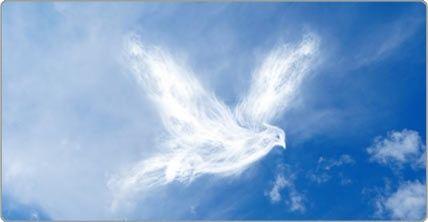Glorious Dove