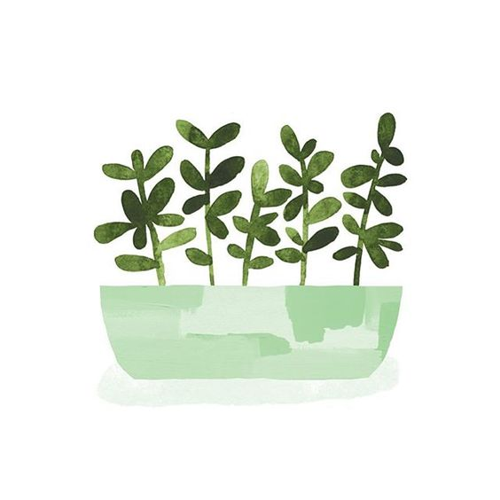 Day 98 #JBP100Plants #the100dayproject #APlantADay