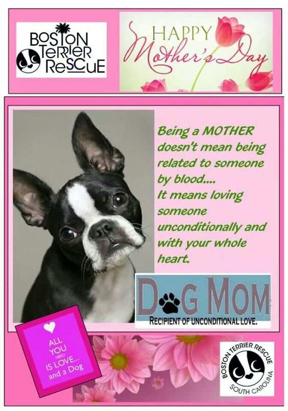 For all the fur mommies out there.