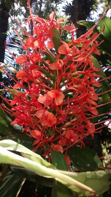 Flores no Jardim do Museu Imperial de Petrópolis