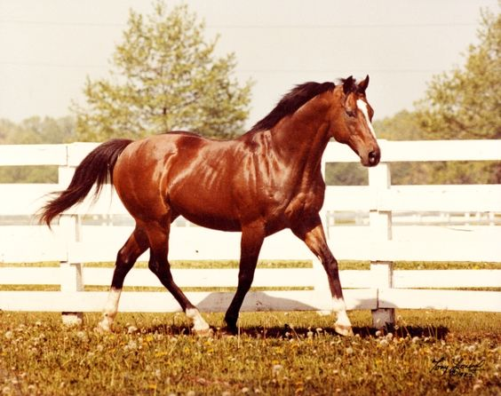 Museum of Civilization ropes in Northern Dancer