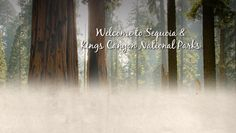 Nights #10-12: Sequoia & Kings Canyon John Muir Lodge $518, Grants Grove cabin $428