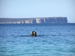 Whale in jervis bay  - Google Search