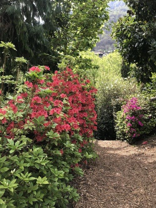Botanischer Garten Piazzogna Che Bello Plants Garten Photographer